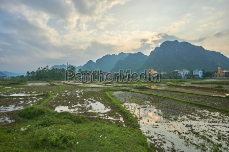 rice fiels near sunset with mountains