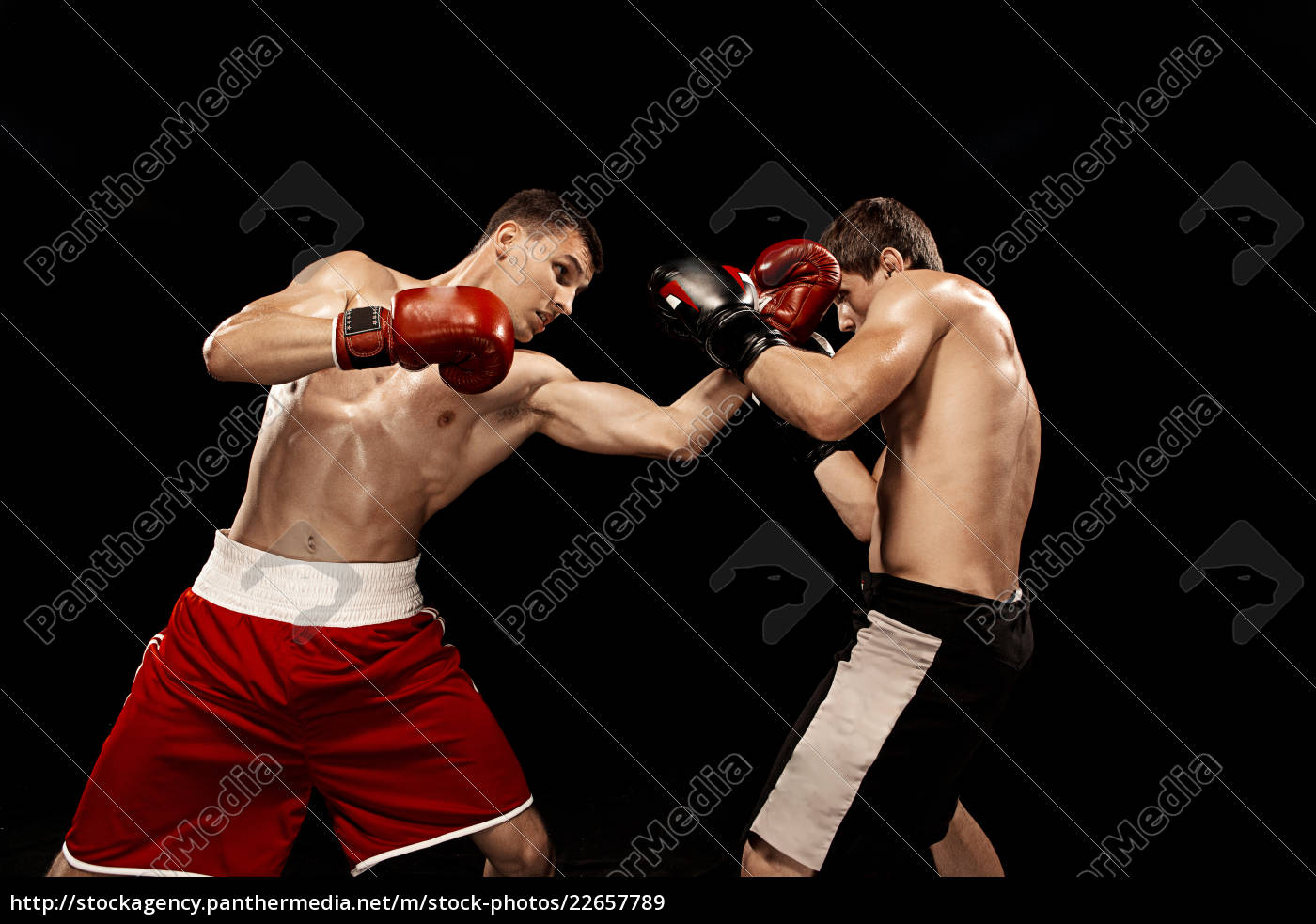 two, professional, boxer, boxing, on, black - 22657789