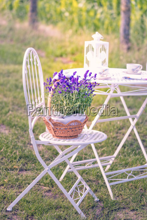 beauty, and, fresh, lavender, in, the - 22659365