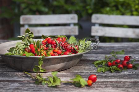 tin bowl of rosehips on garden
