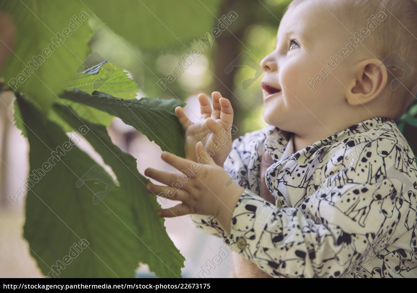 baby, touching, large, leaf, of, chestnut - 22673175