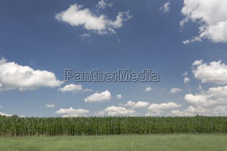 summer sky over farmland with corn