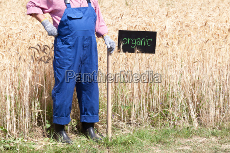 organic, wheat, field - 22713561