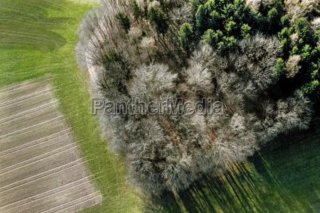 aerial view of trees and agricultural