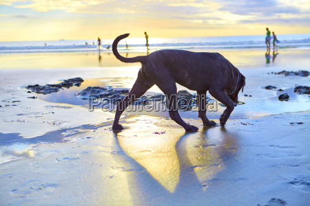 dog playing on beach and group