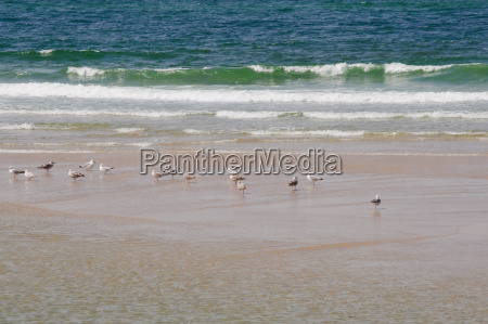 seagulls on the sandy beach of