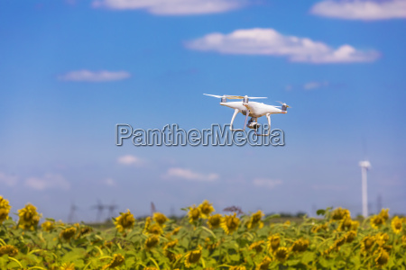 drone hovering over sunflower field