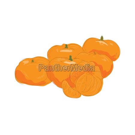 mandarin fruit peeled watercolor