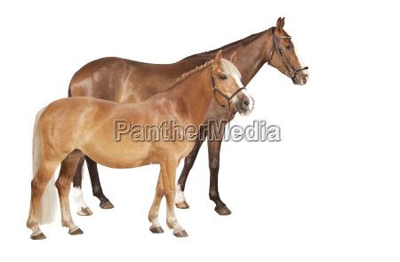 horse and pony free