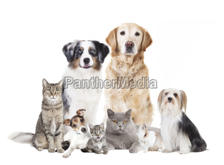 dogs cats exempted
