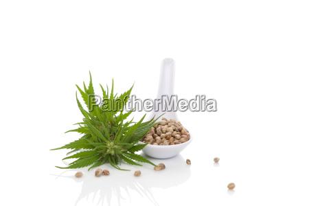 cannabis seeds on spoon isolated