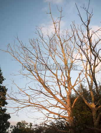 stunning, sun, set, sunlit, bare, trees - 22821899