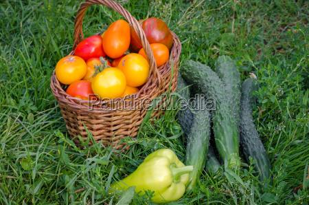 the harvest of fresh vegetables