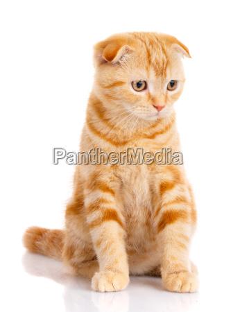 cat beautiful cat purebred cat fluffy