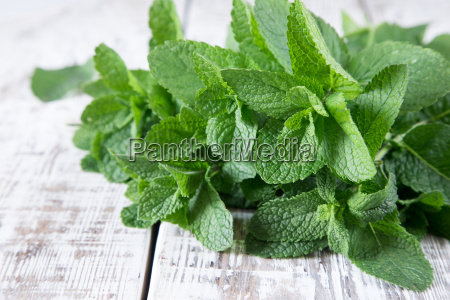 mint bunch of fresh green organic