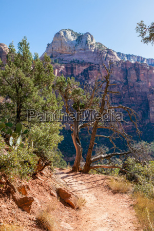 trail through the virgin river valley