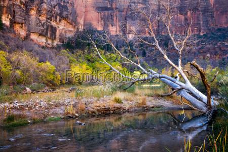dead tree in the virgin river