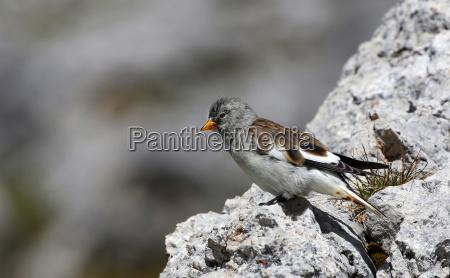 snow sperling