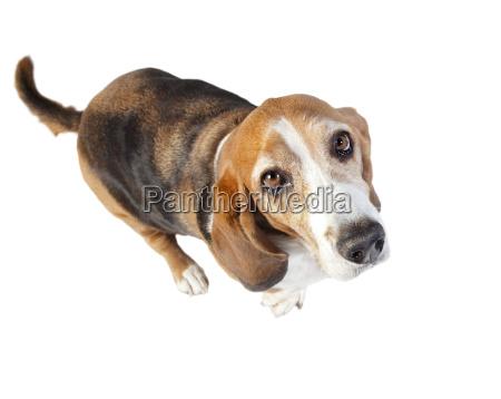 basset hound fisheye exempted