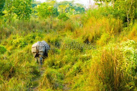 one horned indian rhinoceros rear end
