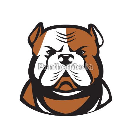 american bulldog head front retro