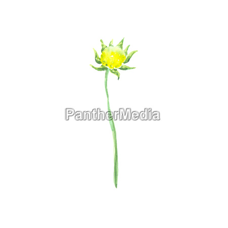 bright watercolor flower with leaf isolated