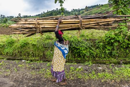 mulher carregando lenha em sua cabecaparque