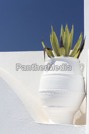 cacti in whitewashed urn against white