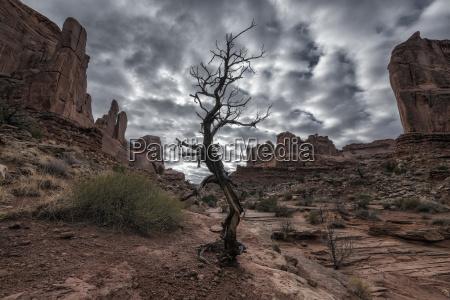 barren tree in desert under