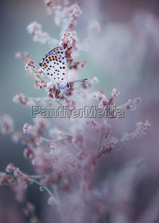 close up of butterfly on wildflower