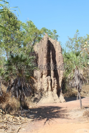 huge termite mound in the northern