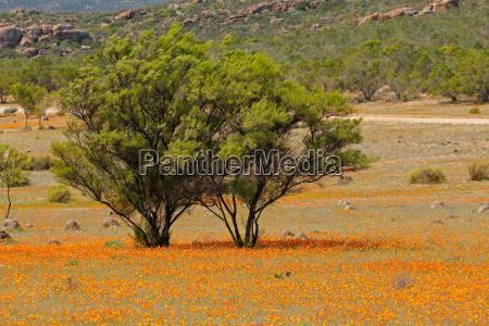 wild flowers landscape