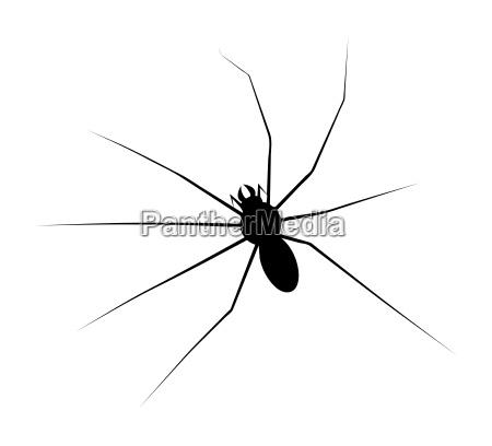 halloween spider vector symbol icon design