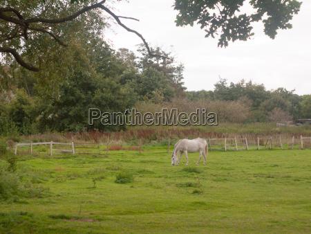 white horse outside grazing in field