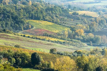 italy tuscany chianciano terme vineyard fields