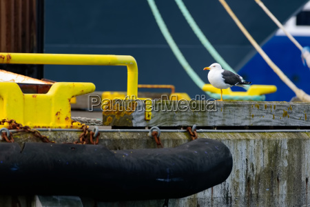 seagull in an abstract environt in