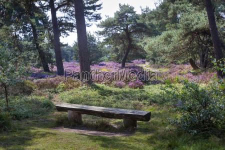 bench on an idyllic place in