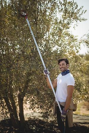 smiling young man using olive rake