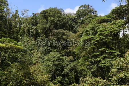 cloud forest canopy vegetation