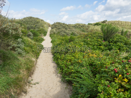the beach and the dunes of