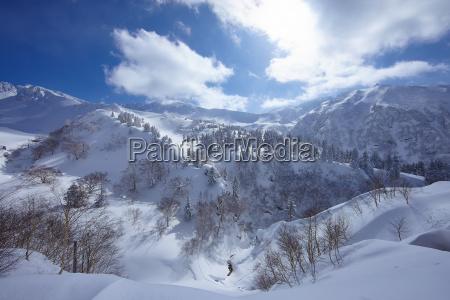 mountainous landscape with trees on snow