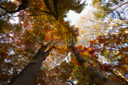 low angle view of tree canopy