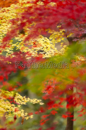 lush vibrant yellow and red foliage