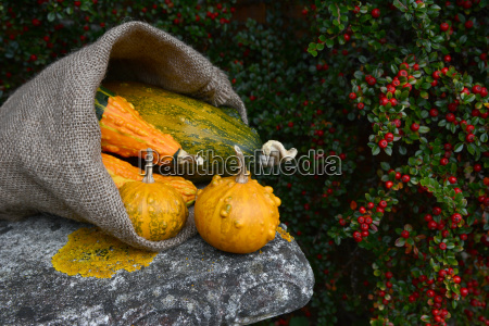 hessian sack overflowing with orange and