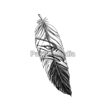 sea eagle feather tattoo