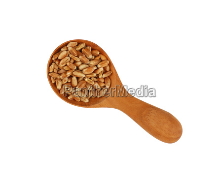wheat grain close up in wooden