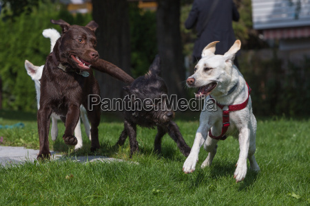 dogs play with each other