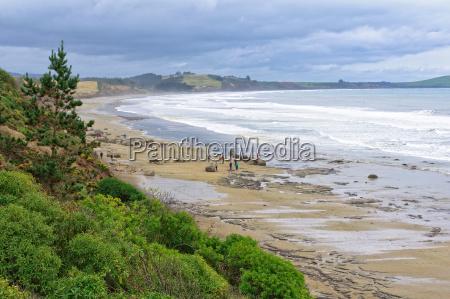 moeraki coast 2 moeraki