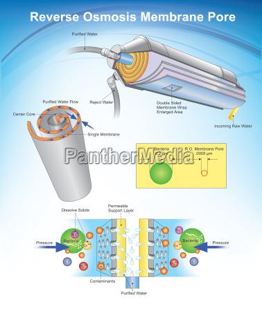 reverse osmosis membrane pore