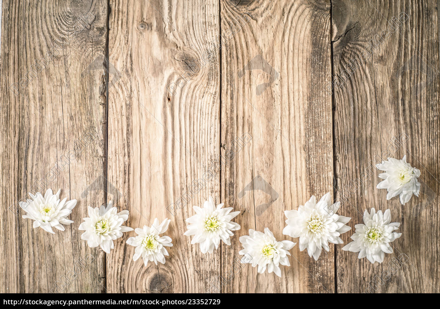 Royalty Free Image 23352729 White Flowers On The Wooden Background Top View